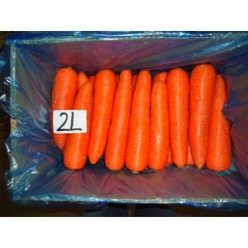 Zanahoria muy fresco