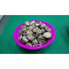 Popular & Low Price Dried Tea Flower Shiitake Mushroom