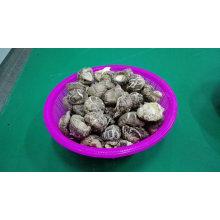 Preço Popular & Baixo Seco Chá Flor Cogumelo Shiitake