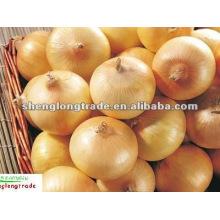 2011 mesh bag packed fresh yellow onion(4-9cm)