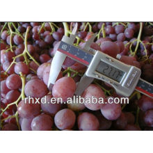 Red Globe Grapes Super Quality