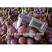 Красный Глобус Виноград Супер Качество