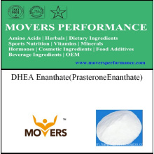 Steroid DHEA Enanthate (Prasterone Enanthate)