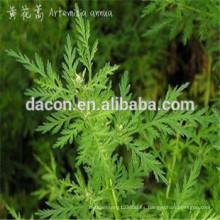 Artemisia annula extracto en polvo