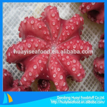 new fishing various size frozen octopus