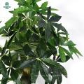 Árvore artificial - árvore de dinheiro trançado falso (51 polegadas) com grandes folhas verdes luxuriantes