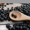 Nueva cosecha 2017 pequeño riñón negro frijol