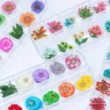 3D Nail Art Designs Manicure Mix Natural Dried Daisy Flowers Nail Decorations Jewelry Floral Leaf Stickers