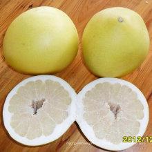 Buena calidad de pomelo dulce fresco