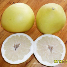 Good Quality of Fresh Sweet Pomelo