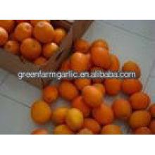 Deliciosa mandarina de china