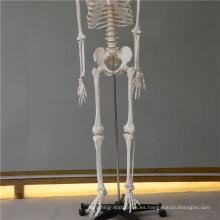 Nuevos esqueletos de plástico mini
