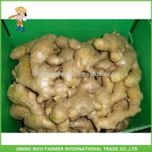 Fresh Ginger Exportador Gengibre chinês 150g até 5kg / 10kg Carton