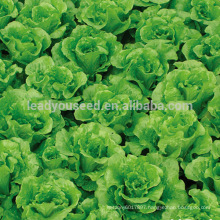 LT07 Duoke high yield green lettuce seeds, quality leaf vegetable seeds