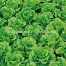 LT07 Duoke alto rendimento sementes de alface verde, sementes de hortaliças de qualidade