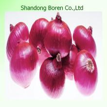 2015 Shandong Vegetal Cebola Vermelha