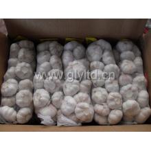 Bonne qualité L'ail blanc frais chinois