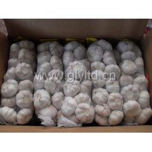 Good Quality Chinese Fresh White Garlic