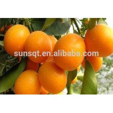 SunShine 100% natürliches Cumquat-Mehl für den Einsatz in Lebensmitteln und Getränken aus China