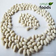 Tipos de feijão e leguminosas