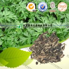 Raw Material Herbal Medicine Folium Artemisiae Argyi