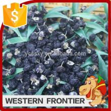 Hochwertige und preiswerte neue Ernte schwarze Goji-Beere