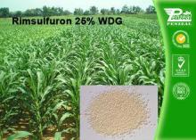 Rimsulfuron 25% WDG Selective Weed Killer For Lawns / Selec