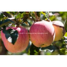 Круглый пресной дешевые Qinguan яблоко