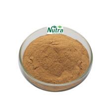 Poudre naturelle d'extrait de noisette de haute qualité
