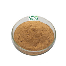 Polvo de extracto de avellana natural de alta calidad
