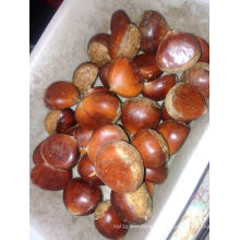 Fresh Chestnut New Crop 2016