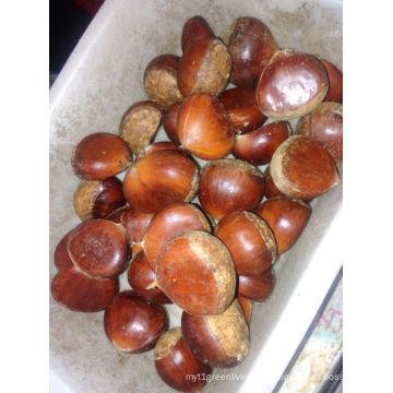 Fresh Chestnut New Crop 2016