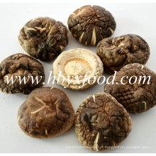 5.5cm acima Secado Nutritious Smooth Shiitake Mushroom