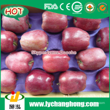 2015 New Red Apples Market Price