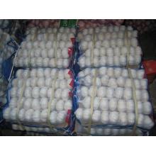 Chino fresco de buena calidad 5.5 Pure White Garlic