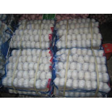Chinese Fresh Good Quality 5.5 Pure White Garlic
