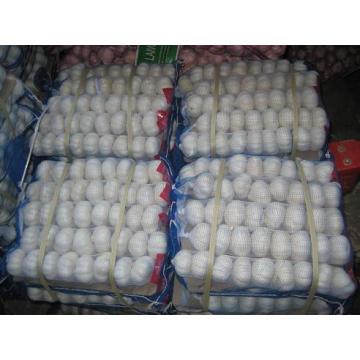 2015 New Crop Jinxiang White Garlic (4.5cm and up)