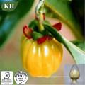 Weight Loss Herbal Ingredient Garcinia Cambogia Extract Hca /Hydroxycitric Acid 60% HPLC