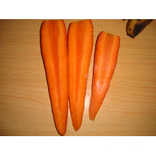 Carrot Fresh