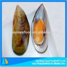 Congelados meia shell mexilhão marisco fresco à venda