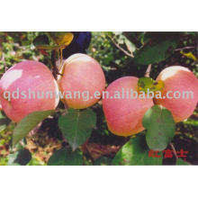 chinese class A fresh fu ji apple