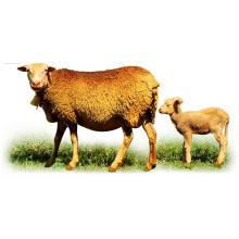 (Flavophospholipol 8%) -Promoteur de croissance des animaux Flavophospholipol 8%
