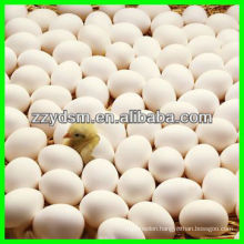 competitive price egg incubator for chicken ,duck ,goose ,pigeon etc.