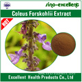 Natural Coleus Forskohlii Extract Forskolin