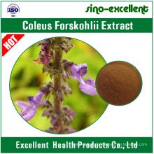 Natürlicher Coleus Forskohlii Extrakt Forskolin