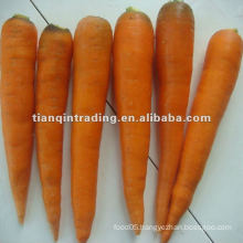 2012 chinese red carrot