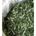 Kaninchen-Lebensmittel Tiernahrung Gerstengras für Tier