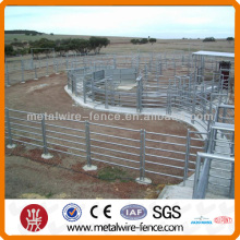 4 foot tall cattle panel fencing