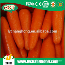 2014 New Red Carrot with 10kg/ctn