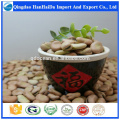 High quality broad bean , fava bean , bulk Dried Broad Beans for sale with reasonable price and fast delivery